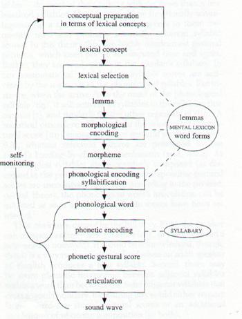 Models Of BIlingualism By Vivian Cook